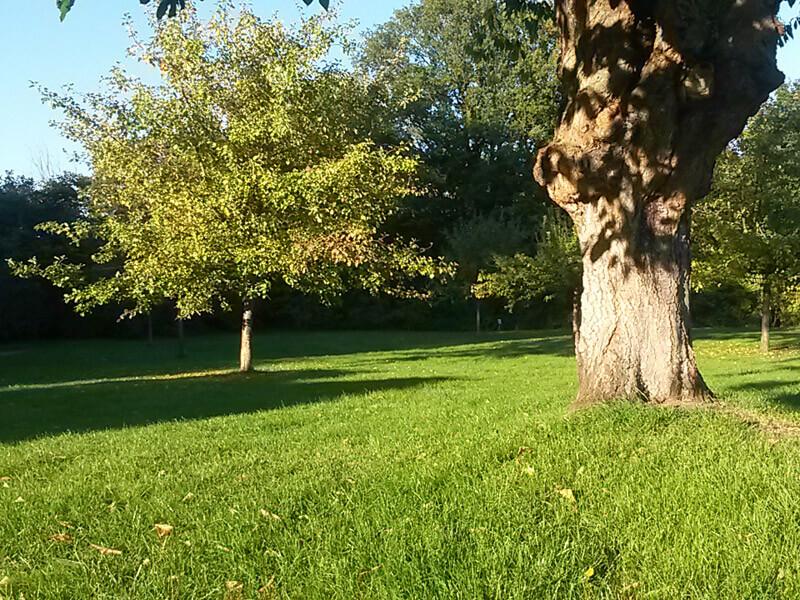Bäume im Fürstengarten in Lauenburg