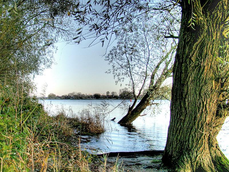 Bäume am Ufer der Elbe bei Lauenburg